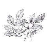 De botanische illustratie van de inkt zwarte bloem Stock Afbeeldingen