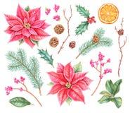 De botanische inzameling van Watercolourkerstmis royalty-vrije illustratie