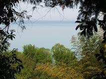 De Botanische Tuin van Batumi Stock Afbeeldingen