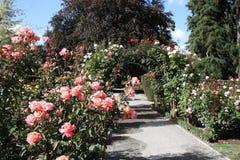 De botanische tuin van Christchurch stock afbeeldingen