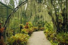 De Botanische Tuin van Singapore Royalty-vrije Stock Afbeelding