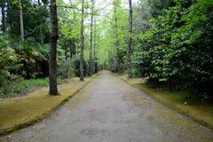 De botanische tuin van Terra Nostra in Furnas, de Azoren, Portugal royalty-vrije stock fotografie