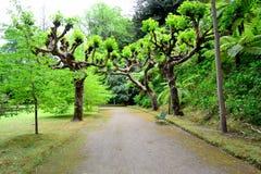De botanische tuin van Terra Nostra in Furnas, de Azoren, Portugal stock foto's
