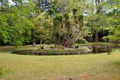 De botanische tuin van Terra Nostra in Furnas, de Azoren, Portugal royalty-vrije stock afbeeldingen
