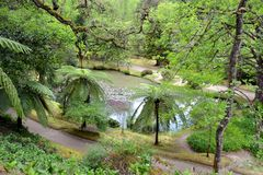 De botanische tuin van Terra Nostra in Furnas, de Azoren, Portugal stock afbeelding