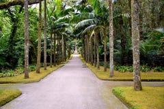 De botanische tuin van Terra Nostra in Furnas, de Azoren, Portugal stock fotografie