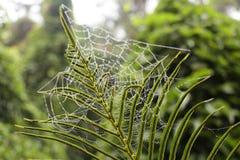 De Botanische Tuin van Xiamenwanshi royalty-vrije stock afbeelding