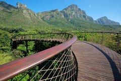 De Botanische Tuinen van Kirstenbosch stock foto's