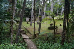 De Botanische Tuinen van Puertoplata Stock Afbeelding