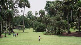 De Botanische Tuinen van Singapore stock video