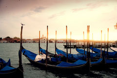 De Boten van de gondel in Venetië, zeemeeuw het letten op Royalty-vrije Stock Foto