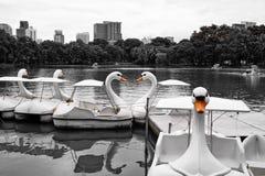 De boten van de zwaanpeddel royalty-vrije stock afbeelding