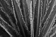 De boucles dos et blanc naturels dedans Photo libre de droits