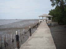 de bouw bij mangrovebos Royalty-vrije Stock Afbeelding
