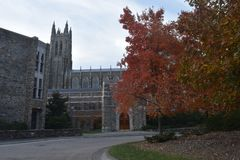 De bouw, bomen en weg in Duke University stock afbeeldingen