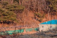 De bouw met blauw dak stock afbeeldingen