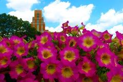 De bouw met bloemen Stock Fotografie