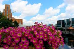 De bouw met bloemen Stock Afbeeldingen