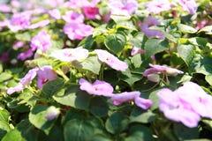 De bouw van de tuinschoonheid Stock Fotografie