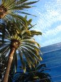 De bouw van het bureau met palmen Stock Fotografie