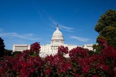 De Bouw van het Capitool, Washington DC Stock Foto's