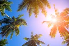 De bovenkant van de Cocopalm met oranje gloed Palmkronen met groene bladeren op zonnige hemelachtergrond stock afbeelding