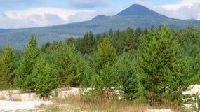 De bovenkant van de berg en de bomen Royalty-vrije Stock Foto