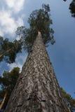 De bovenkant van de boom stock fotografie