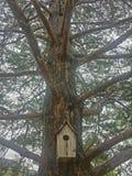 De bovenkant van de boom Stock Afbeelding