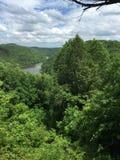 De bovenkant van de boom Royalty-vrije Stock Afbeelding