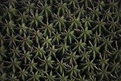 De Bovenkant van de cactusinstallatie Stock Afbeeldingen