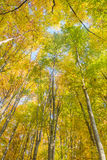 De bovenkant van de herfstbomen stock fotografie