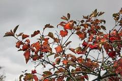 De bovenkanten van de bomen De herfst royalty-vrije stock fotografie