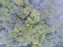 De bovenkanten van de bomen De mening vanaf de bovenkant Royalty-vrije Stock Fotografie