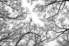 De bovenkanten van de boom in de sneeuw Royalty-vrije Stock Afbeeldingen