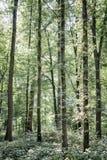 De bovenkanten van de Taalboom in een bos Royalty-vrije Stock Foto's