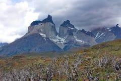 De brända-ner träden mot bakgrunden av Cuernos del Paine i nationalpark av Torres del Paine i Chile Royaltyfria Bilder