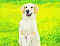 De braaf Golden retrieverhond voert bevel uit, die zich op zijn achterste poten over gras in de zonnige zomer bevinden royalty-vrije stock afbeelding