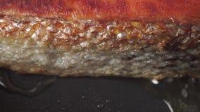 De bradende korst van het zalmlapje vlees, macro dolly schot stock footage