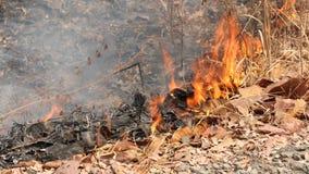 De brand brandt droge bladeren Stock Afbeeldingen