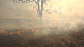 De brand en de Rook, droog gras branden stock video