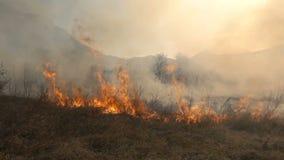 De brand en de Rook, droog gras branden stock videobeelden