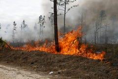 De brand van de bosbouw Stock Foto
