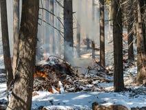 De brand van de schuine streepbrandwond, het Nationale Bos van Tahoe Stock Afbeeldingen