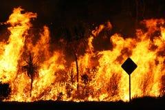 De brand van de struik royalty-vrije stock fotografie