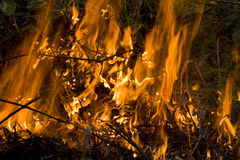 De brand van de struik Royalty-vrije Stock Afbeeldingen