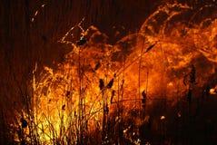 De brand van de zomer op het gebied Stock Fotografie
