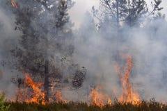 De brand van het pijnboomhout Stock Foto's
