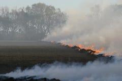 De brand van het stoppelveld Stock Foto's