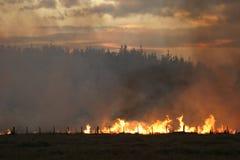 De brand van het stoppelveld bij Schemer Stock Fotografie